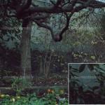 Test - Sony A7R II - ISO 102400