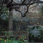 Test - Sony A7R II - ISO 25600